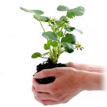 plant-164500_220-2