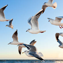 gulls-370012_220
