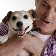 jack-russell-421707_190